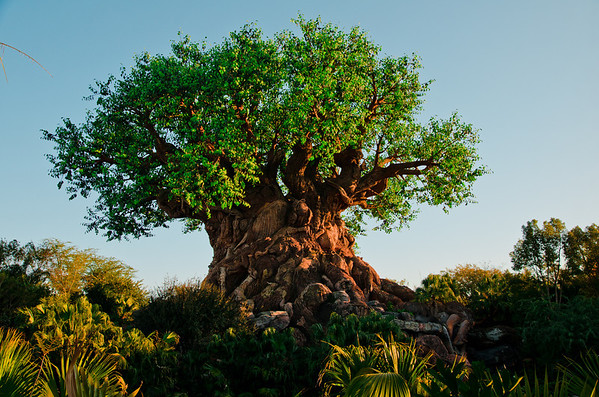The Tree of Life is the park icon at Disney's Animal Kingdom.